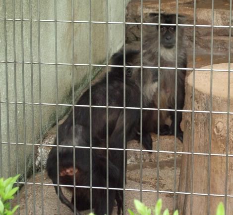 080501_monkeys_10