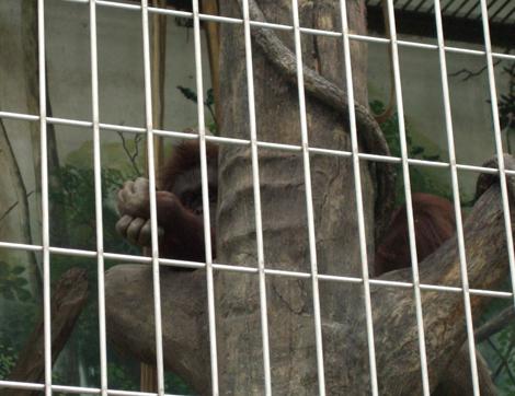 080501_monkeys_14