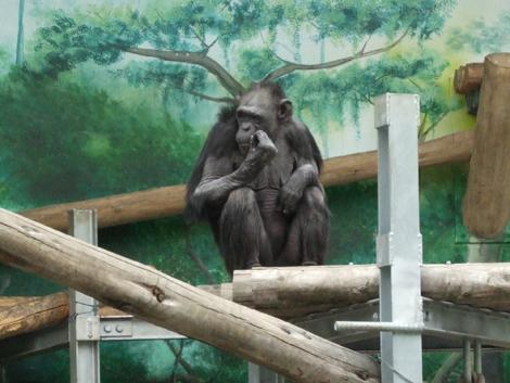 080501_monkeys_2