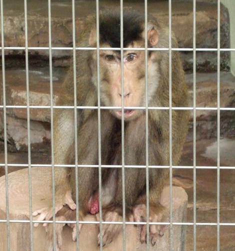 080501_monkeys_9