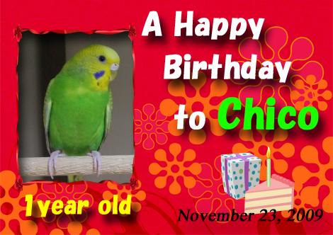 Chico_birthday_2009