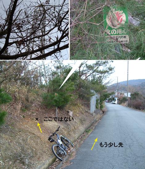 20100110ride_3