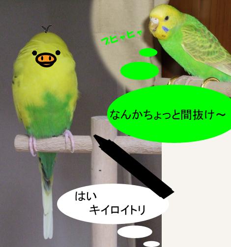 20101106_6