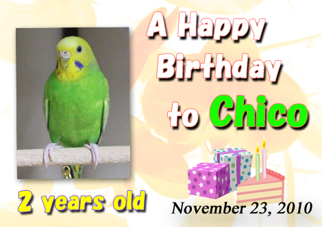 Chico_birthday_2010