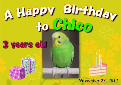 Chico_birthday_2011