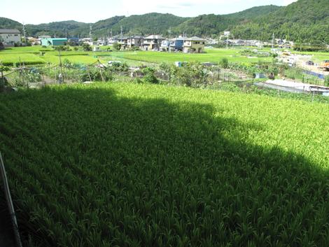 20120912hike_10