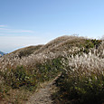 岩湧山山頂のススキ野
